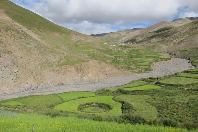 Barley fields, Tsang province, Tibet