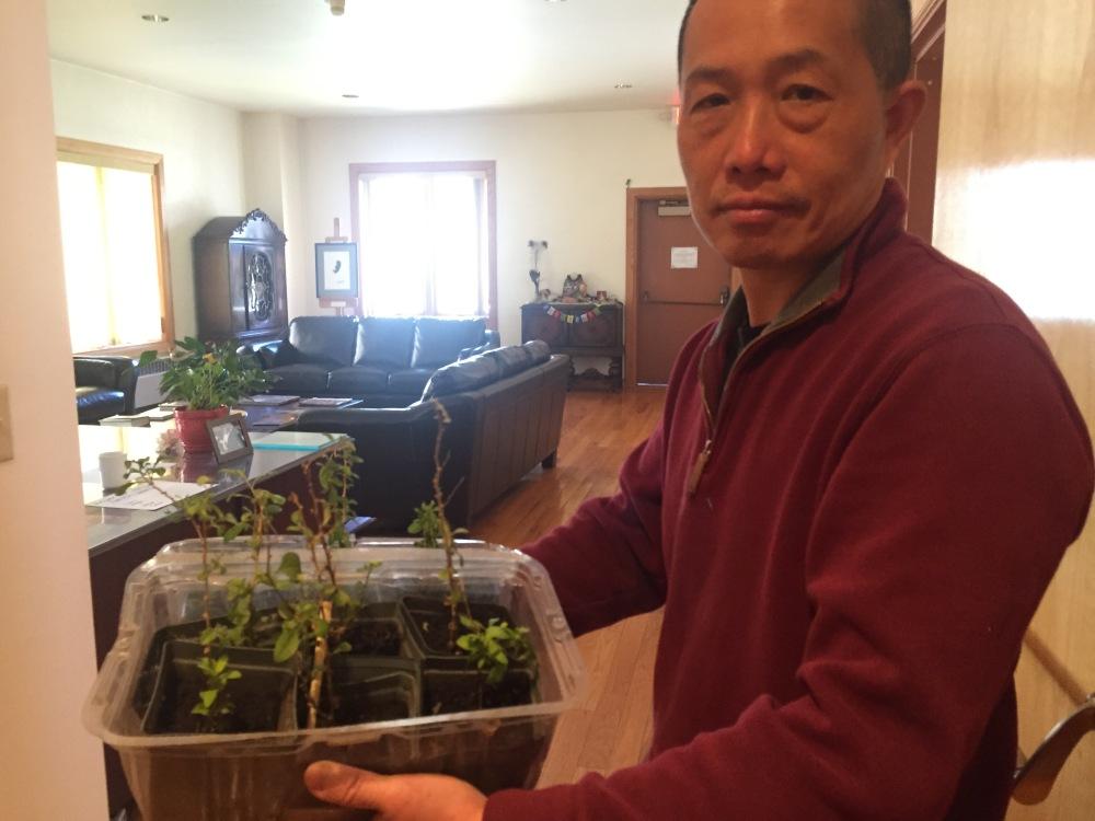 8organic garden and compost_goji berries IMG_8920 copy